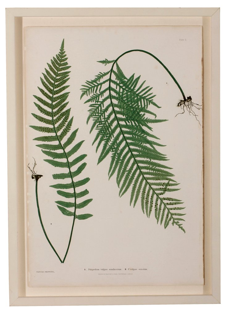 Nature Print of a Fern