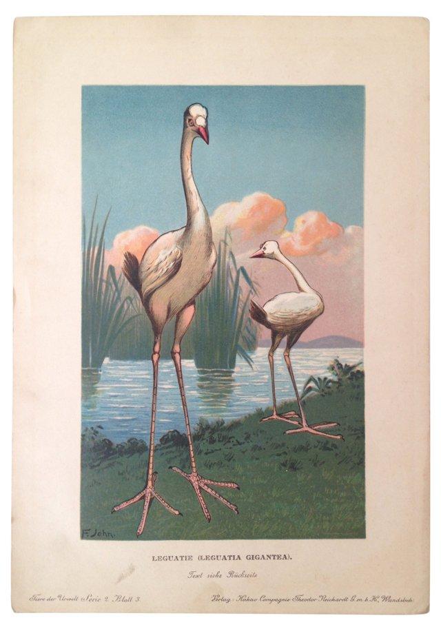 Hand-Colored Flamingos, 1899