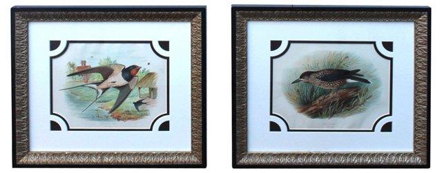 19th-C. Bird Engravings, Pair