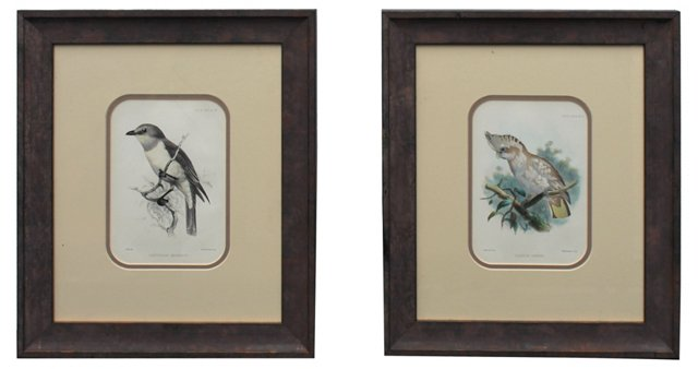 Bird Engravings, Pair