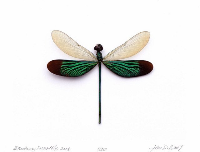 Dragonfly Photograph, Signed & Editioned