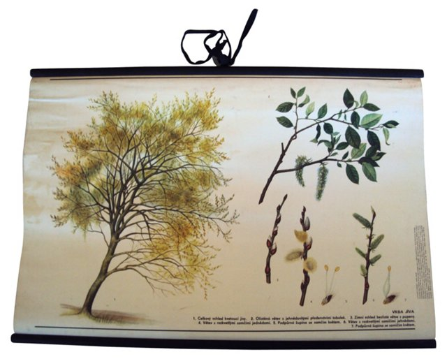 Educational    Poster of Trees