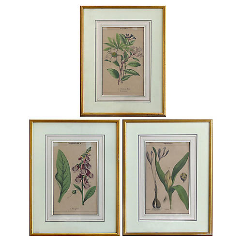 S/3 English Botanical Engravings, 1830
