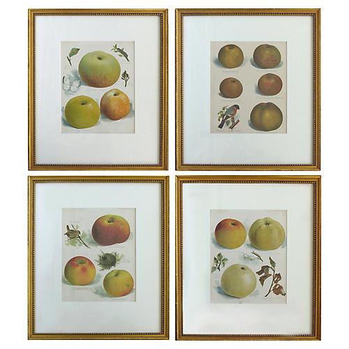 Botanical Prints of Fruit & Birds, S/4