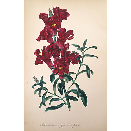 19th-C. Floral Botanical