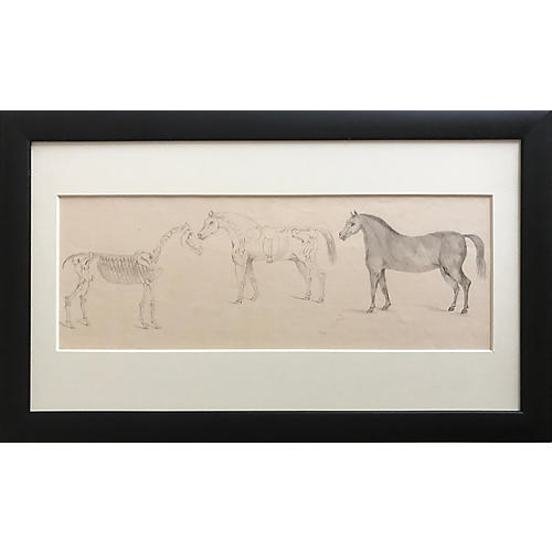 French 19th C Anatomical Horse Drawing