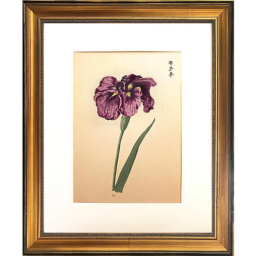 Japanese Iris Woodblock Print, C. 1900