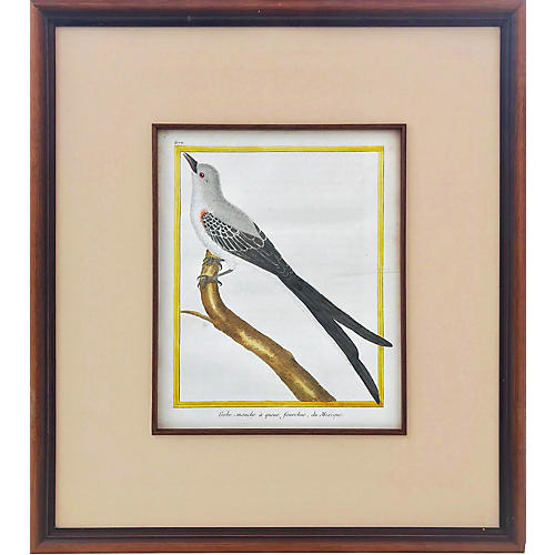 18th-C Martinet Ornithological Engraving