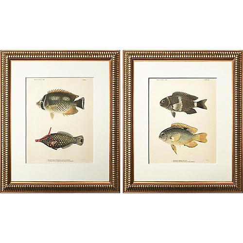 Antique Hawaiian Fish Prints, Pair