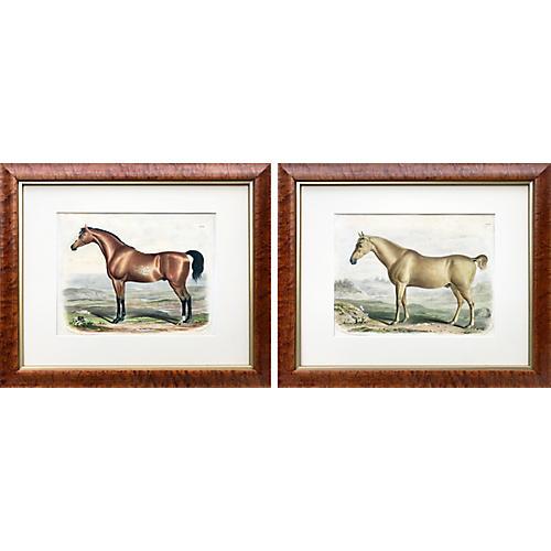 1840 English Horse Lithographs, Pair