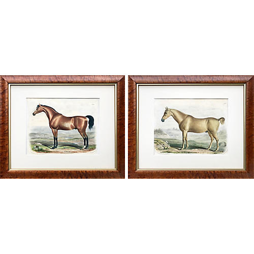 1840 English Horse Lithographs, Pair