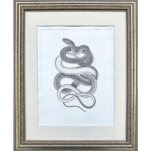 19th-C Snake Lithograph