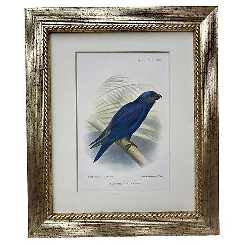 Lithograph of Blue Bird, 1907