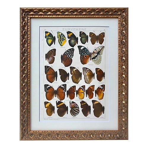 African Butterfles Lithograph Seitz 1909