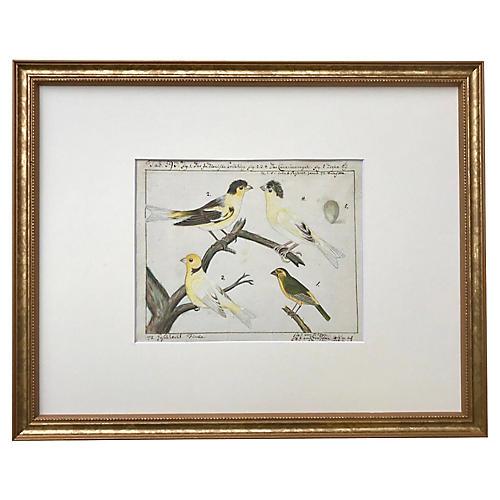 Watercolor Canaries Birds 18th Century