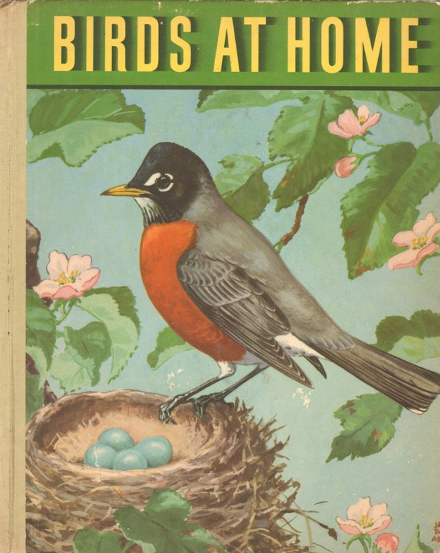 Birds at Home