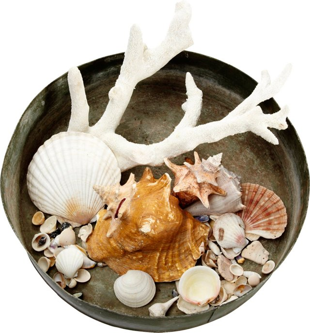 Shell Collection in Large Tole Tray