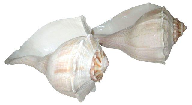 Lightning Whelk Shells, Pair