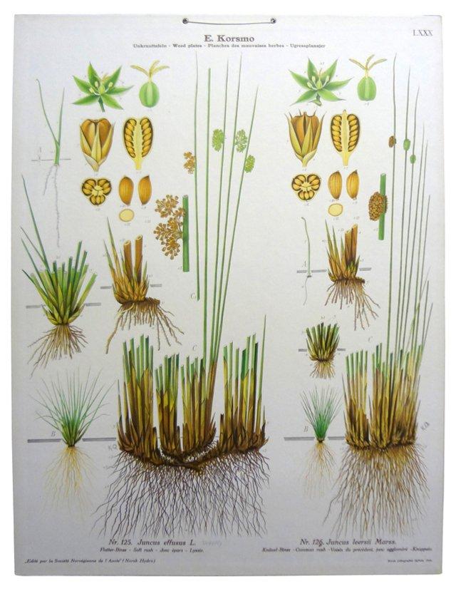 Norwegian Botanical  School Poster