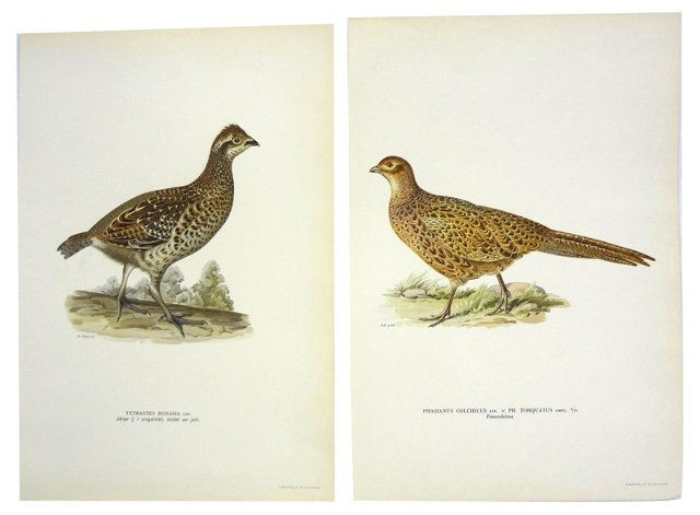 Swedish     Bird   Prints,   Pair