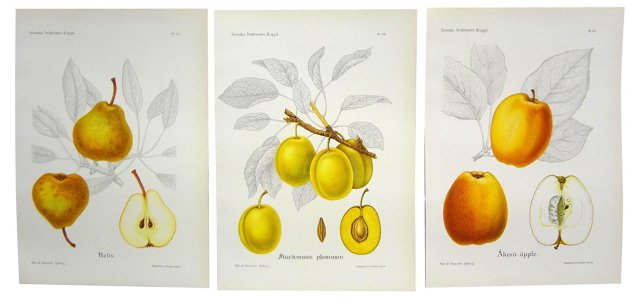 Swedish Fruit  Prints, Set of 3