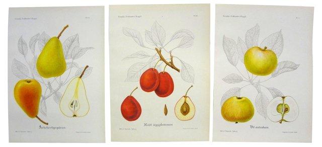 Swedish Fruit    Prints, S/3