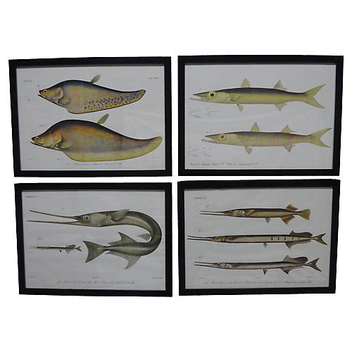 French Fish Prints, S/4