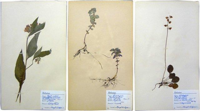 Swedish Pressed  Botanicals,  Set of 3