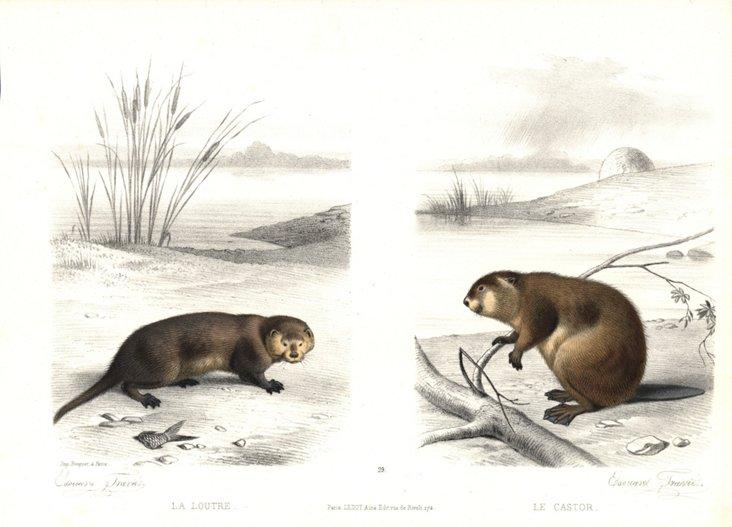 Edoaurd Travies Animals Print, 1860