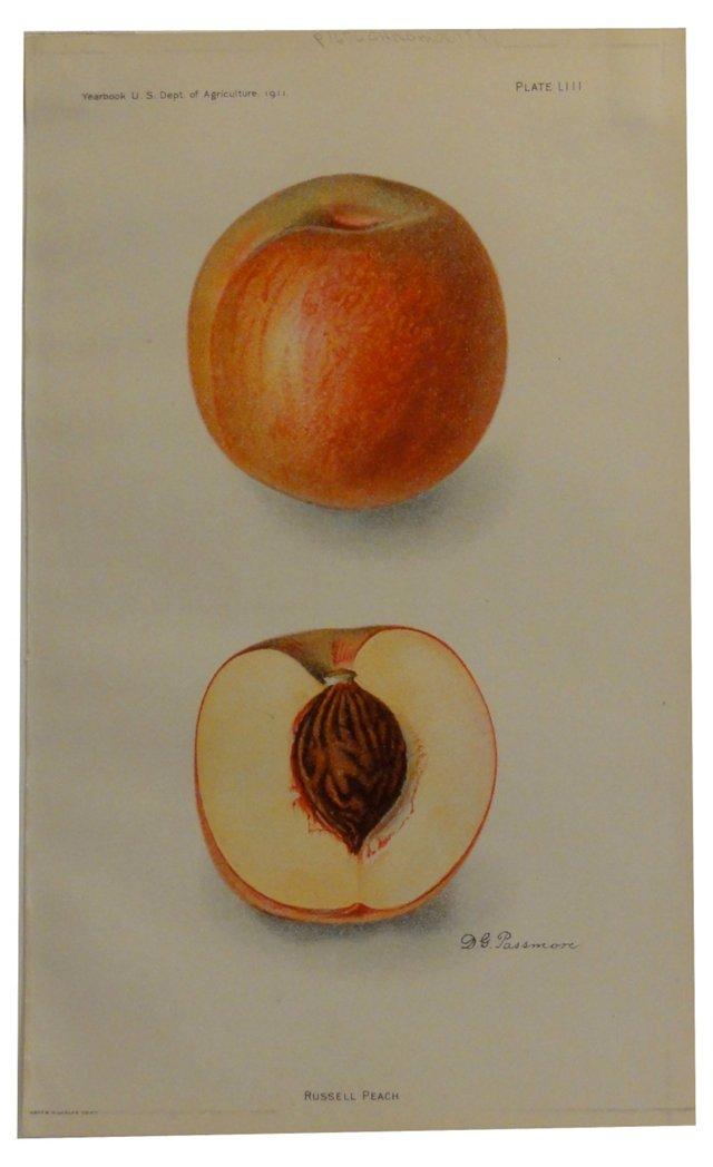 Peach Print, 1911