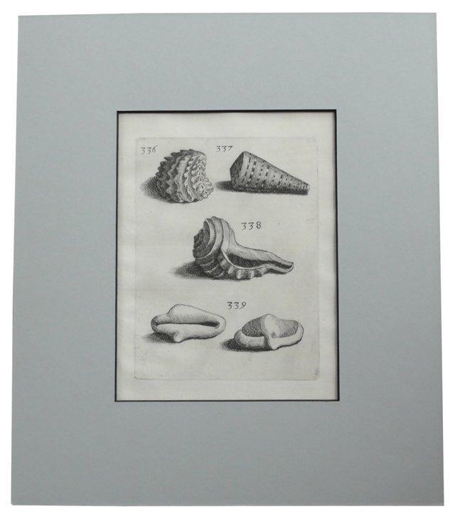 Murex & Whelk Shell Varieties, C.   1680