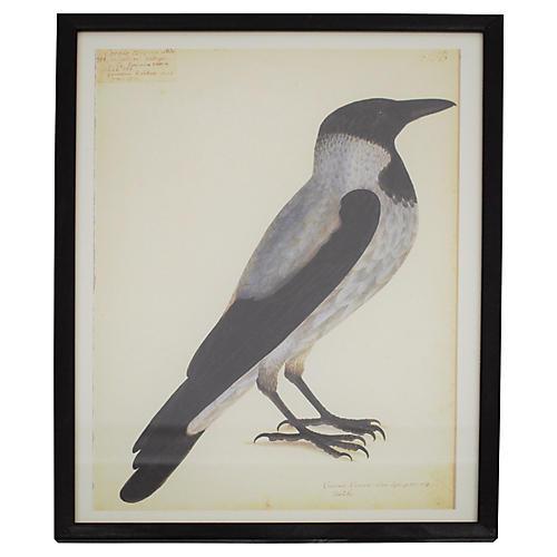 Olof Rudbeck Swedish Bird Print