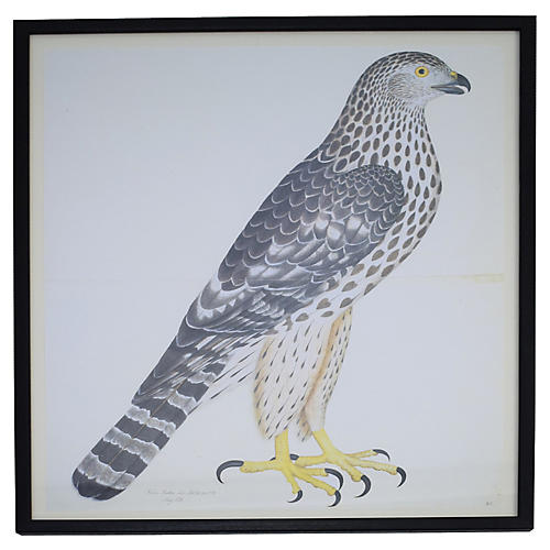 Olof Rudbeck Swedish Bird Print Framed