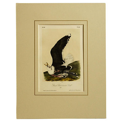 Audubon Black-Backed Gull, 1870