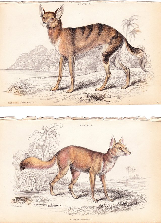 Dog & Fox Prints by Jardine, 1843, Pair