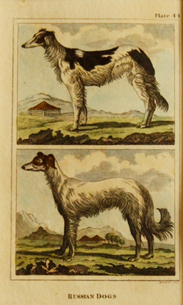 Russian Dogs, C. 1790