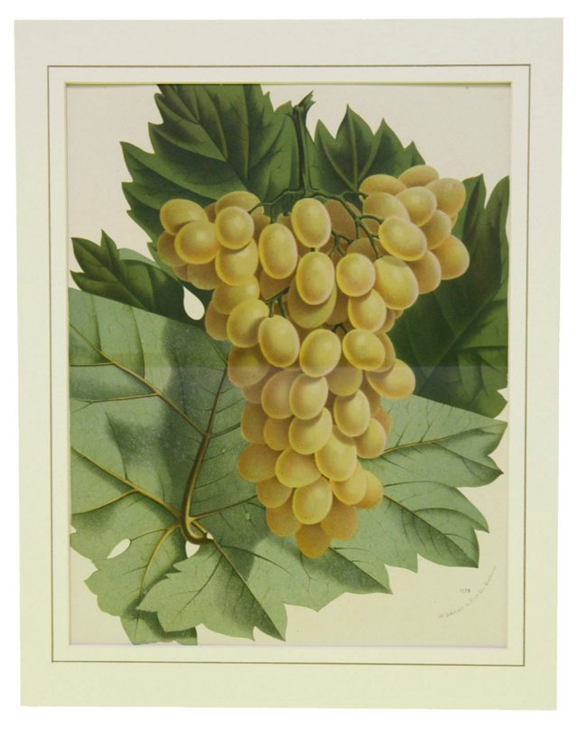 White Grapes, C. 1860