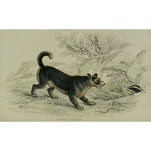 Scotch Terrier, 1843