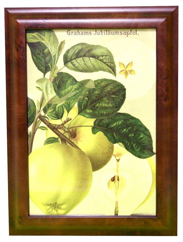 Apples w/ Branch, C. 1900