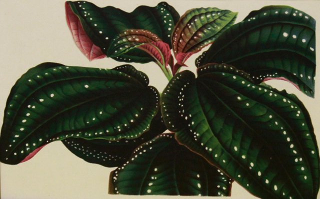 Green Leaves w/ Pink, C. 1860