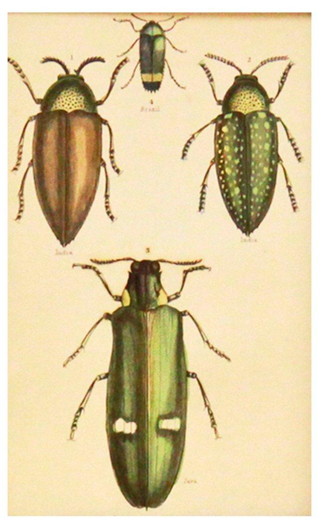 Green Beetles, 1843