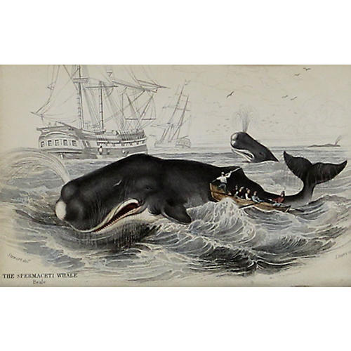 The Spermaceti Whale, 1843
