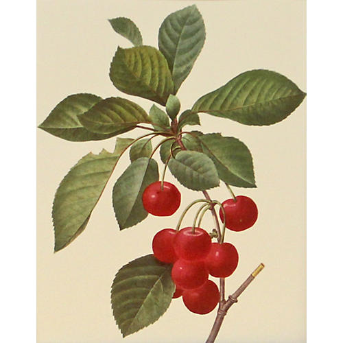 Cherries on Branch w/ Leaves