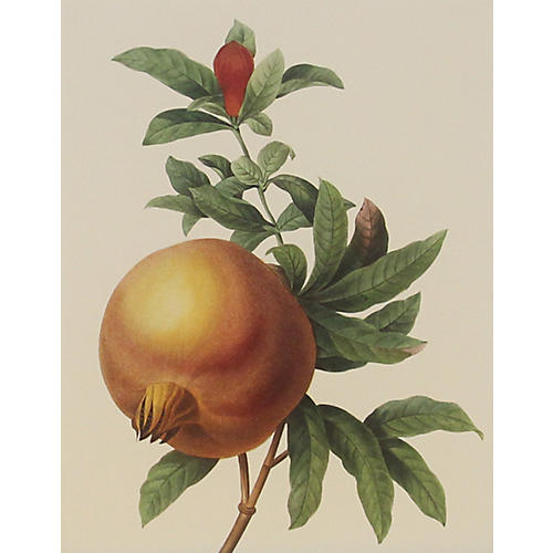 Pomegranate w/ Leaves & Bud