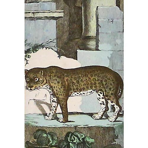 Panther, C. 1800