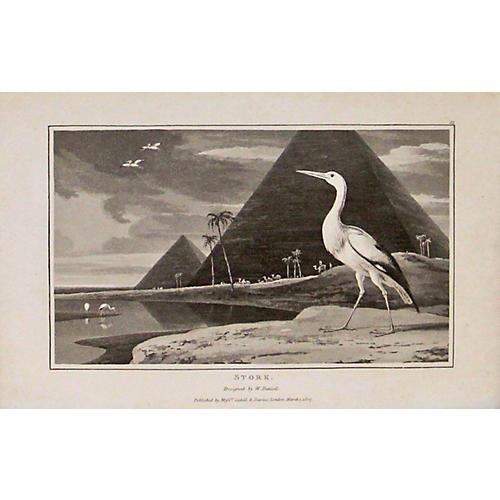 Stork w/ Pyramids, 1810