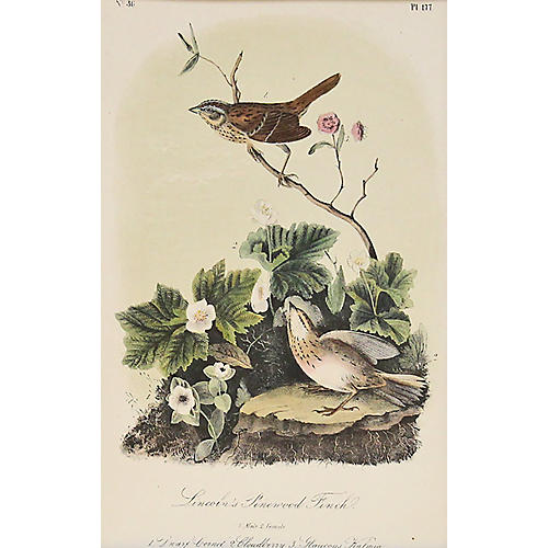 Audubon's Lincoln Pinewood Finch, 1870