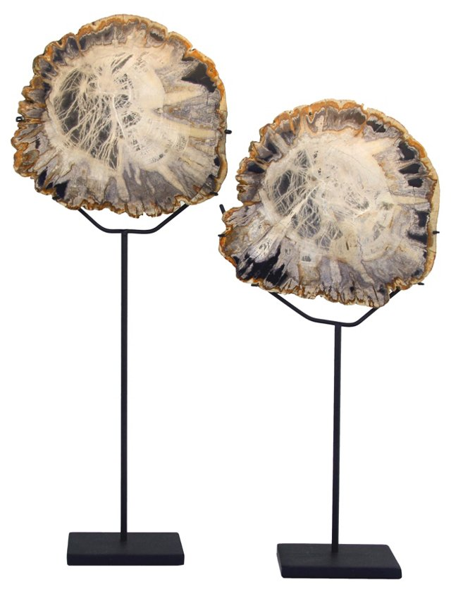Petrified Wood on Stands, Pair