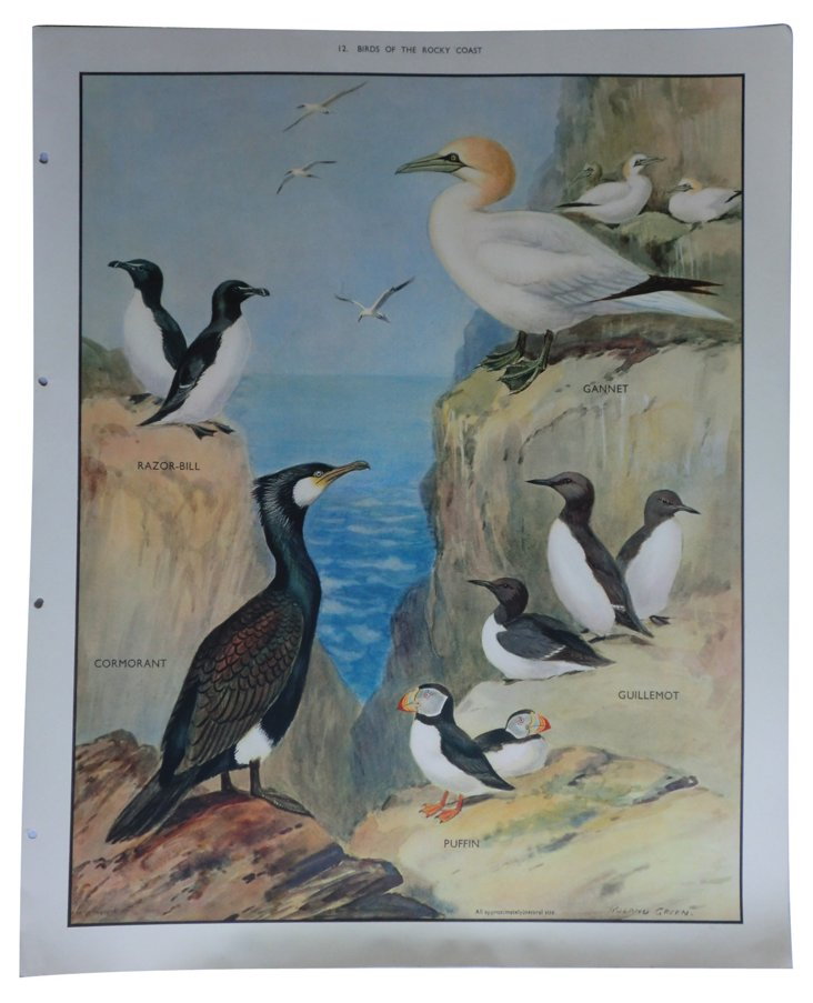 1930s Birds of the Rocky Coast Poster