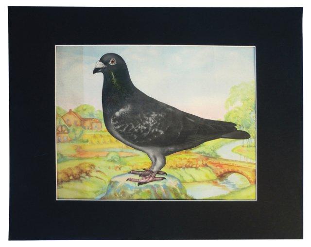 Belgian Racing Pigeon Prize